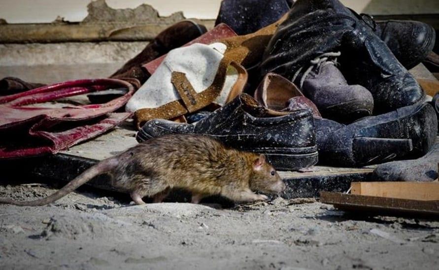 Il decesso è stato confermato muore un intero villaggio per la peste bubbonica